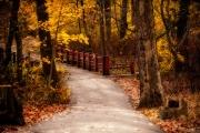 Clove Lakes Trail